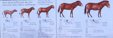 the theory of evolution the horse I am going to show that horses did not evolve at all from eohippus  became a  supporter of charles darwin and a defender of darwin's theory of evolution.